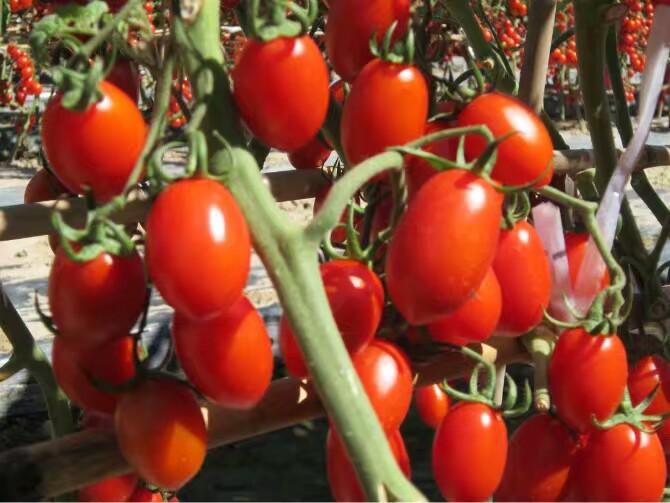 瑞禾水果有机肥