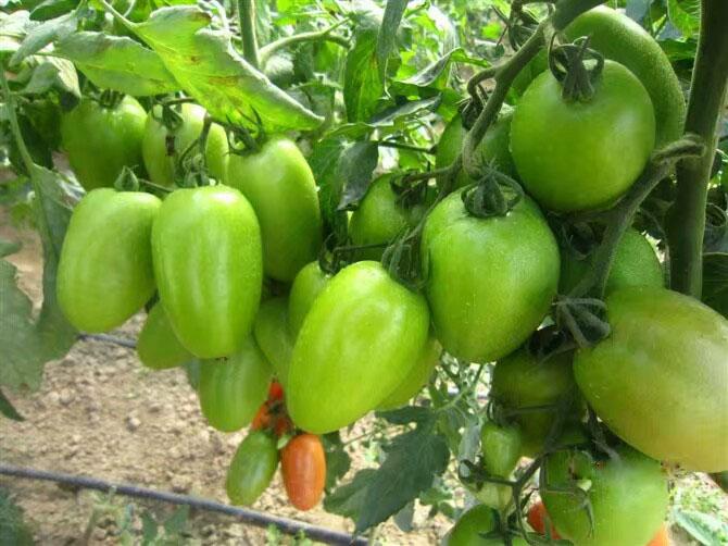 湖北水果专用有机肥