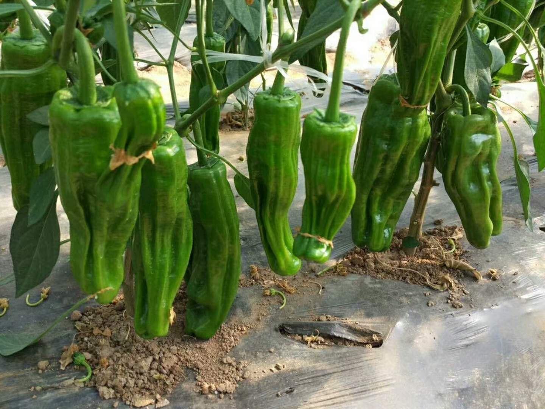 湖北瑞禾蔬菜有机肥专用