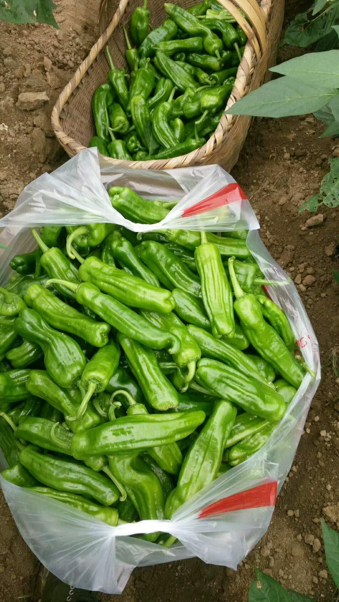 蔬菜有机肥