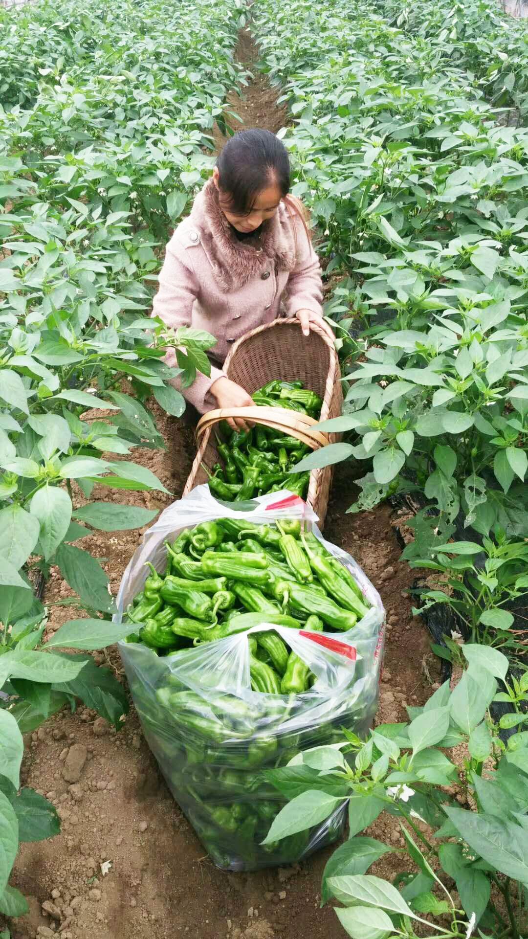 湖北蔬菜水果有机肥专用