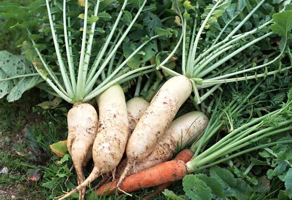 瑞禾蔬菜有机肥厂家价格