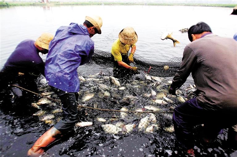水产肥渔生物调水剂厂家