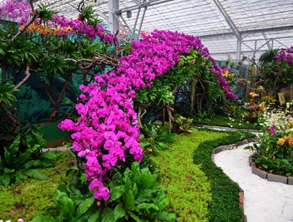 湖北瑞禾牌花卉专用有机肥