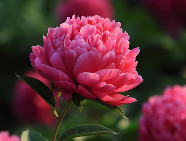 湖北花卉专用有机肥