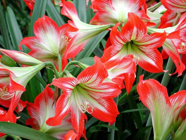 湖北花卉有机肥