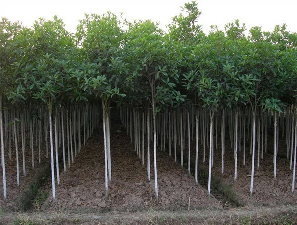 湖北瑞禾牌苗木专用有机肥
