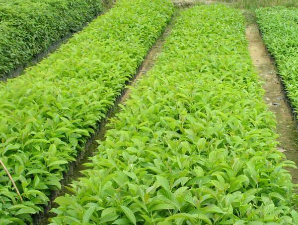 湖北苗木专用有机肥