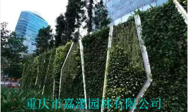 植物墙规划设计
