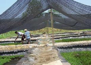 波萝农用遮阳网