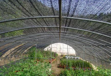 虫楼遮阳网