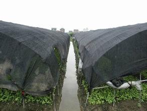 青椒农用遮阳网
