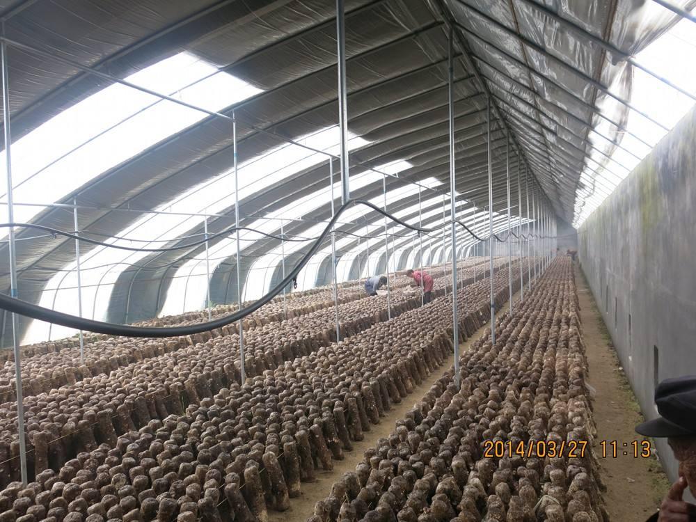 食用菌农用遮阳网