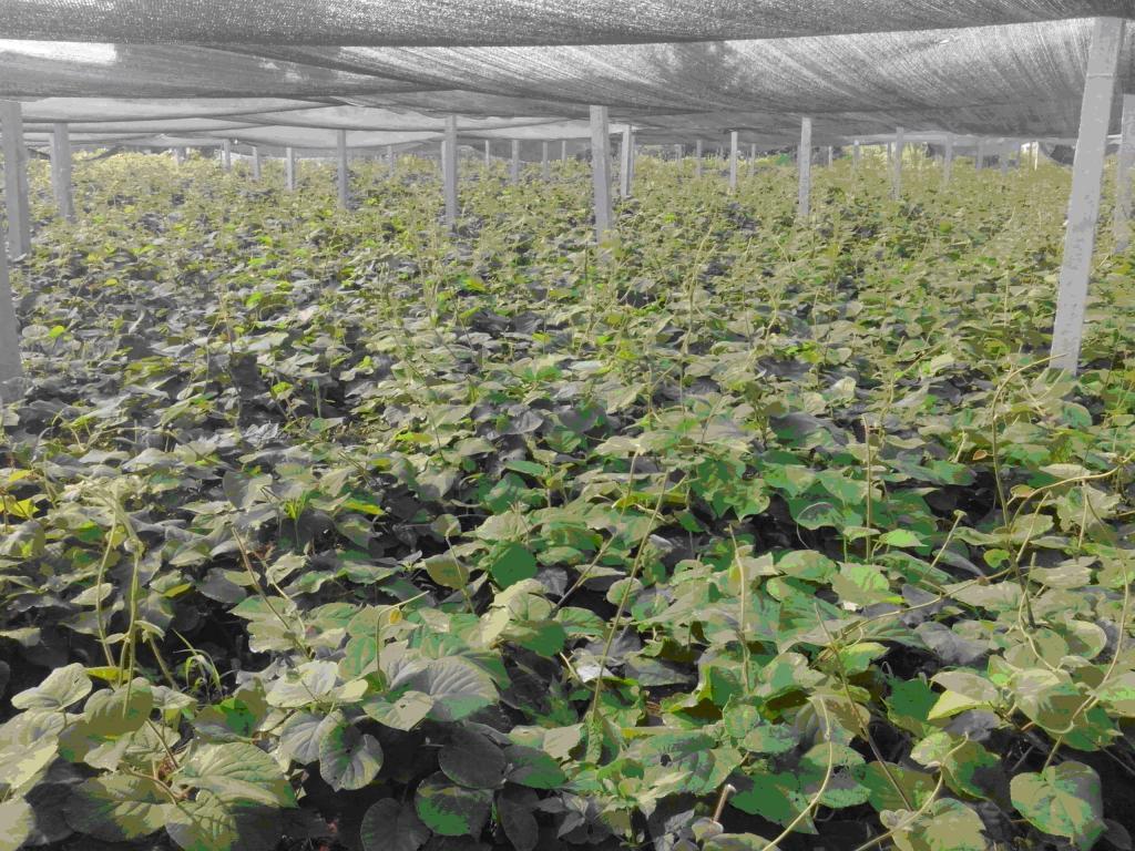猕猴桃农用遮阳网