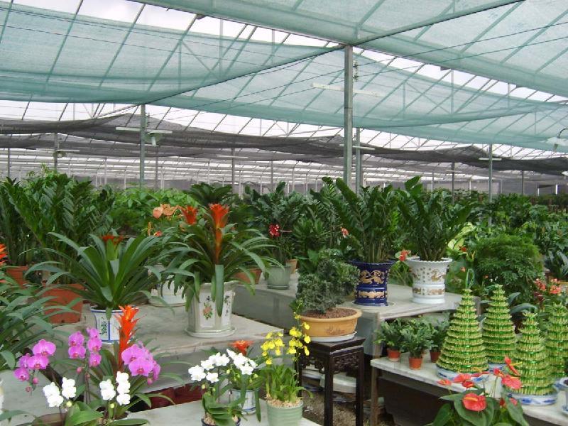 花卉大棚遮阳网