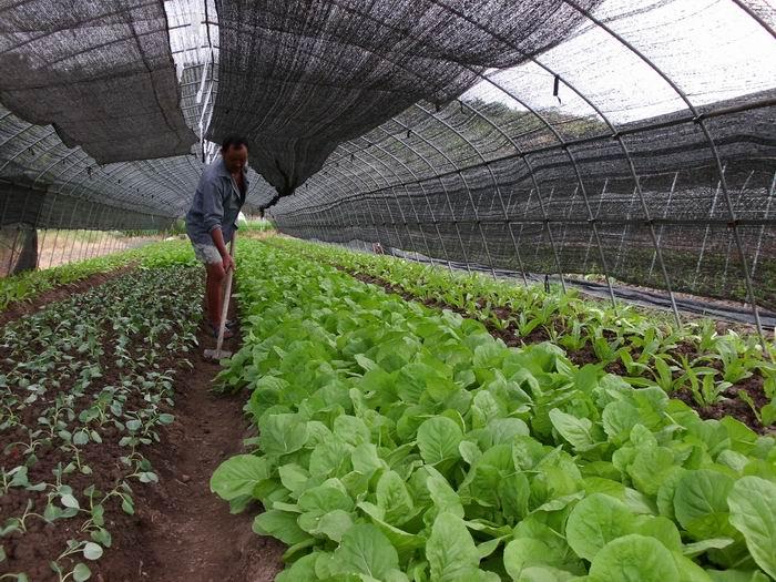 蔬菜大棚遮阳网