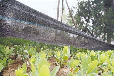 阳台花卉防晒网