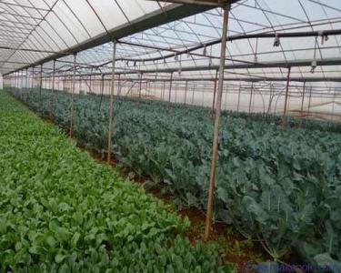 优质蔬菜遮阳网