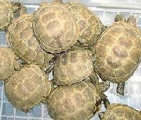 乌龟养殖场