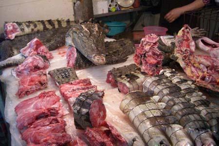批发鳄鱼肉