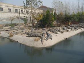 鳄鱼养殖场