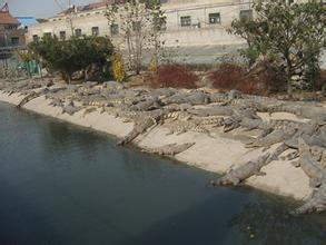 鳄鱼生态养殖
