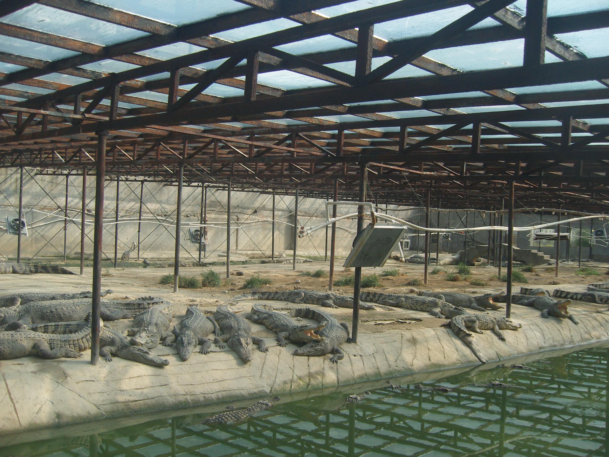 泰鳄生态养殖厂