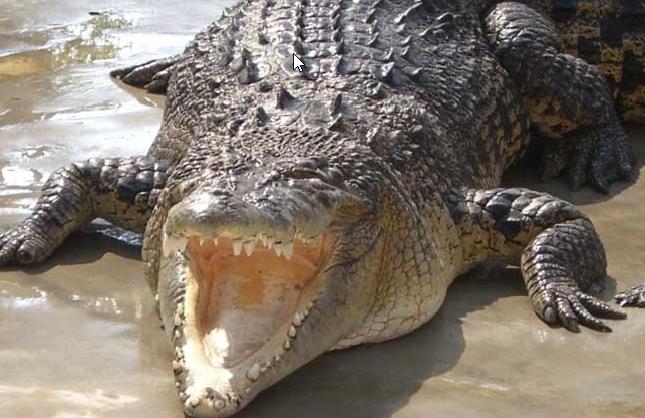 大鳄鱼养殖基地