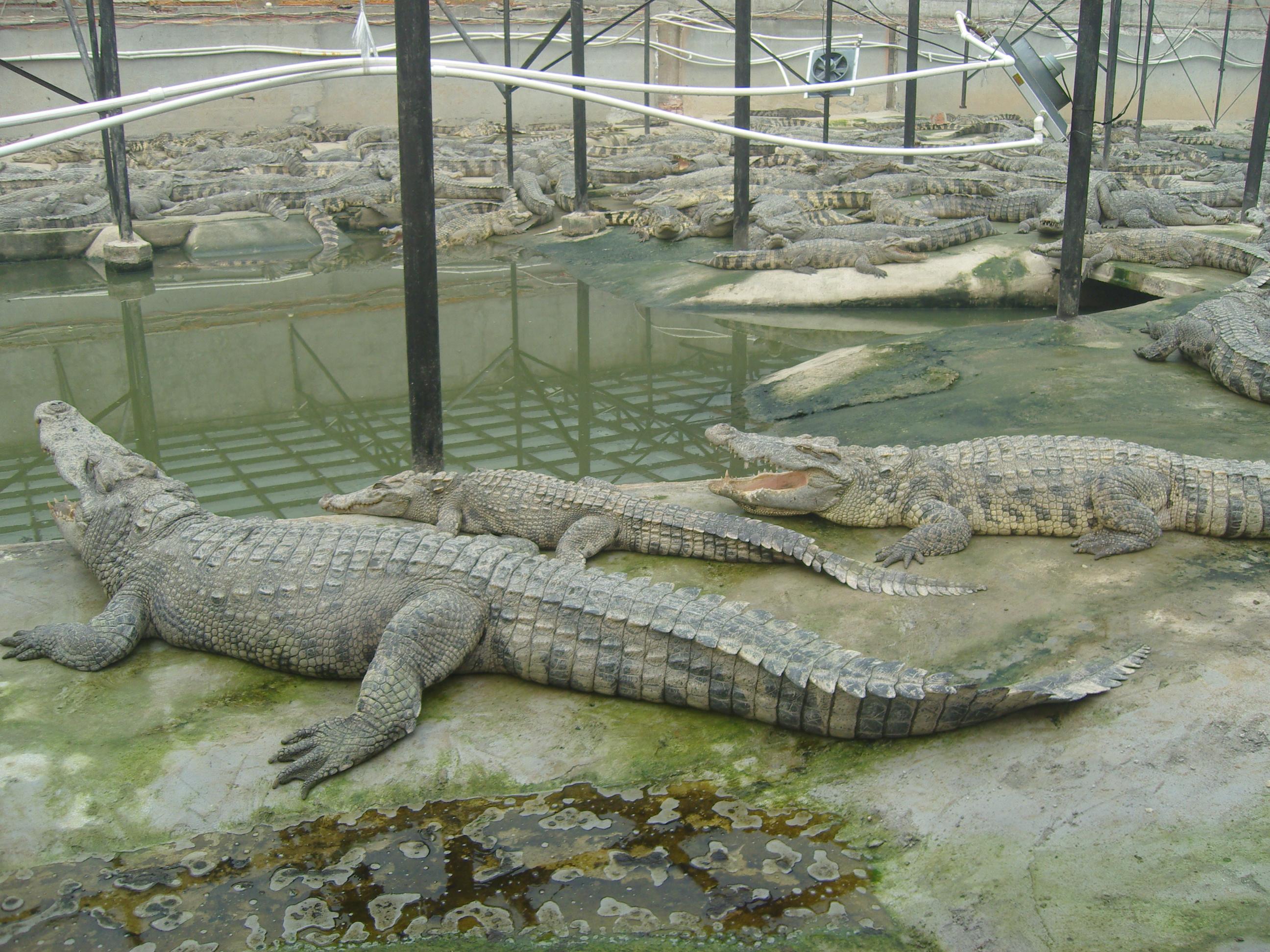 泰鳄生态养殖