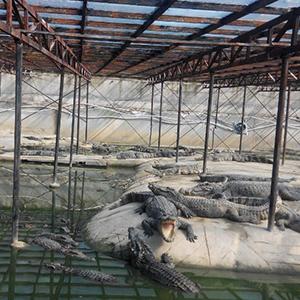 生态鳄鱼养殖池