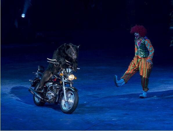 国际大马戏