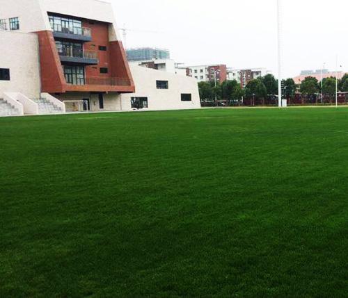 �F�人造草坪