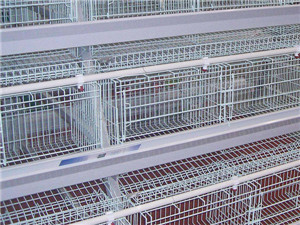 鸡笼制造厂家