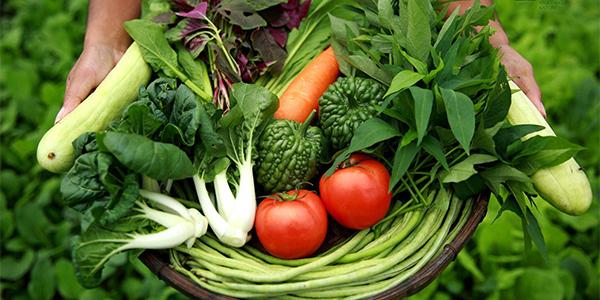 宁波食堂蔬菜配送