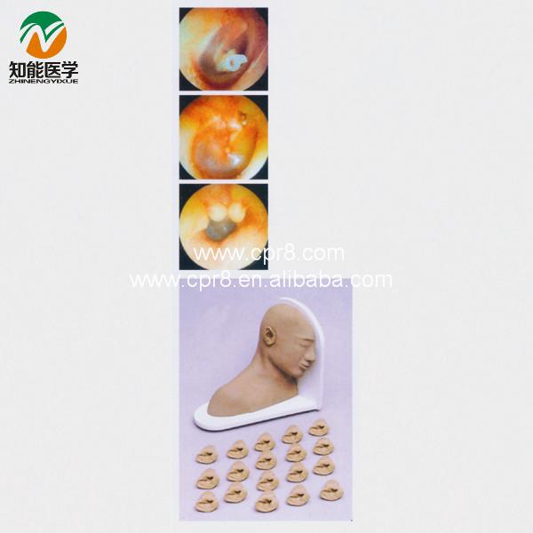 Advanced Ear Examination model