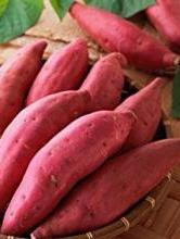 【精华】你知道薯藤冬眠育苗法吗 红薯苗的栽插方法你知道吗