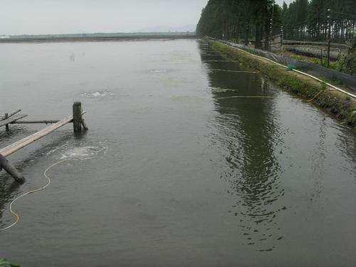 渔业管道增氧