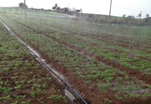 西瓜微喷滴灌带