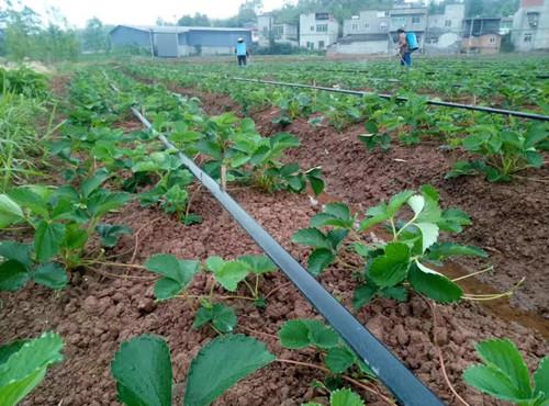 农用灌溉水泵