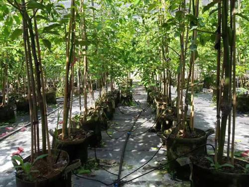 绿化节水灌溉