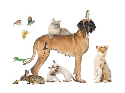 石家庄宠物治疗