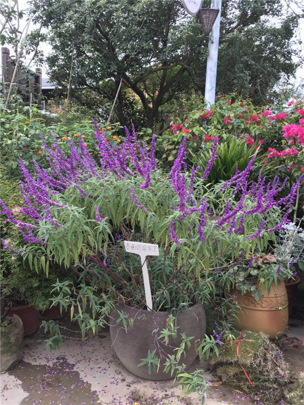 遵义景观植物