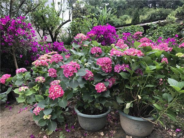 兴义植物景观