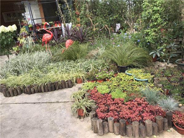 毕节园林景观植物