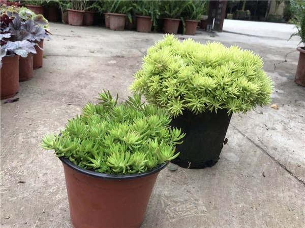 贵阳景观植物销售
