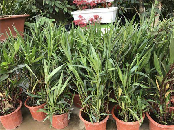 贵阳观赏植物销售