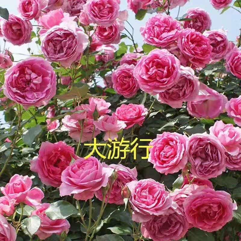 鲜花大游行