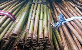 体育版竹manbetx