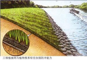 三维植被网护坡应用