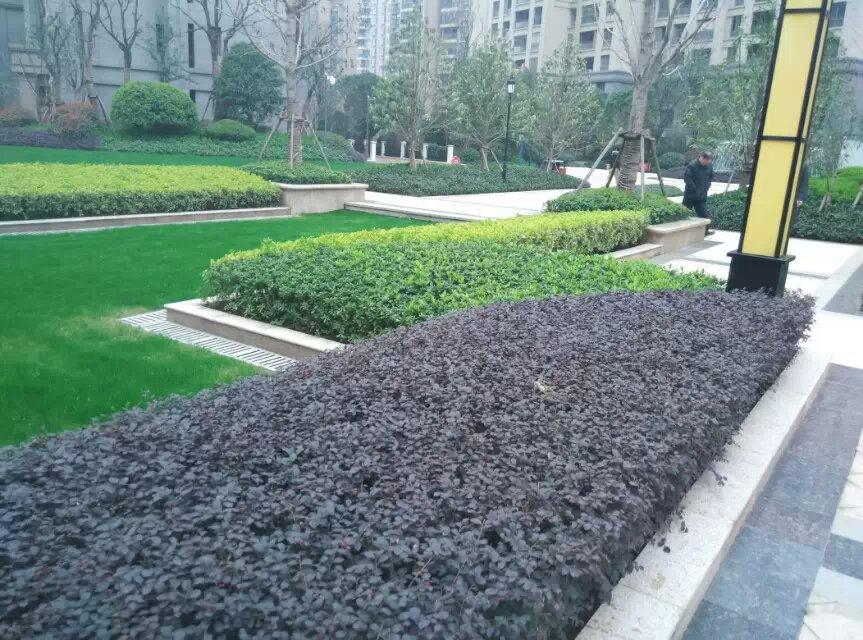 武汉小区绿化工程